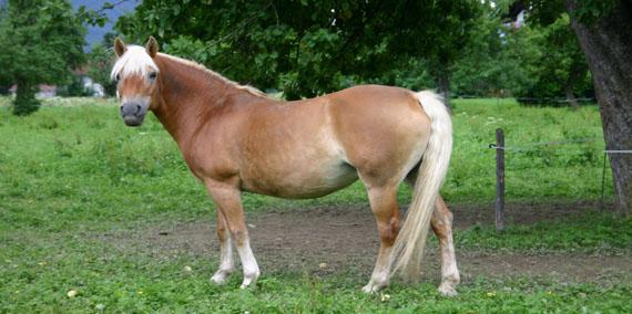 Pferd, © Chiemsee Camping